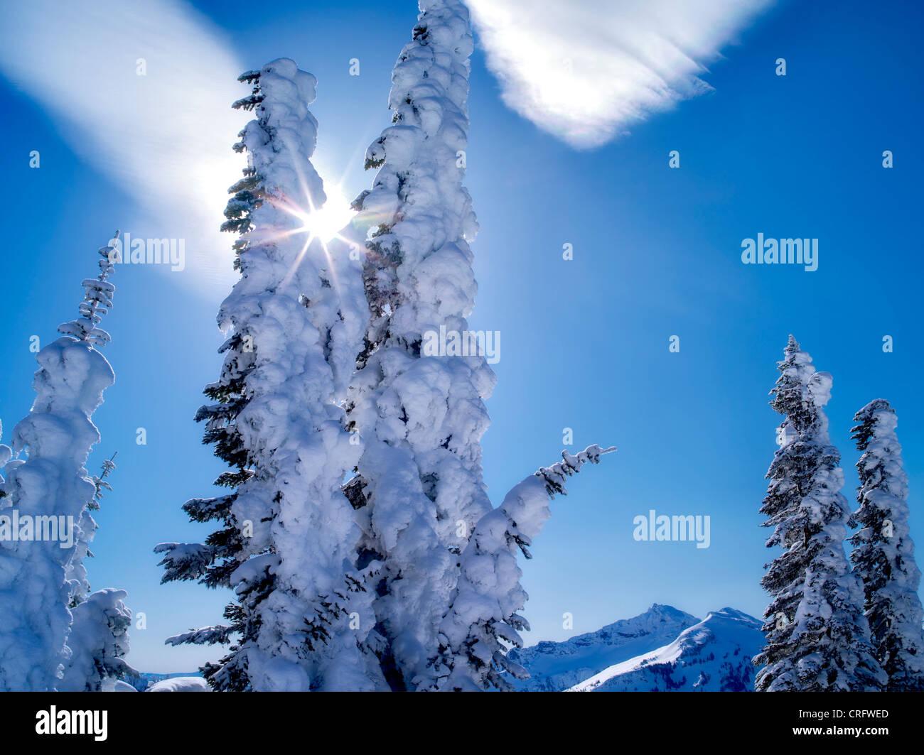 Schneebedeckte Bäume mit Sunburst und Cloud. Mt. Rainier Nationalpark, Washington Stockbild