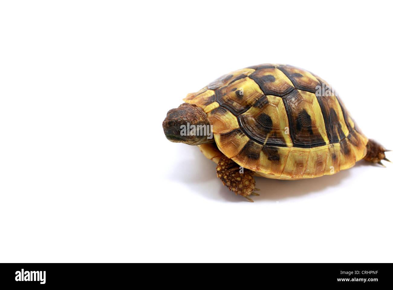 Großartig Baby Schildkröte Färbung Seite Ideen - Malvorlagen Von ...