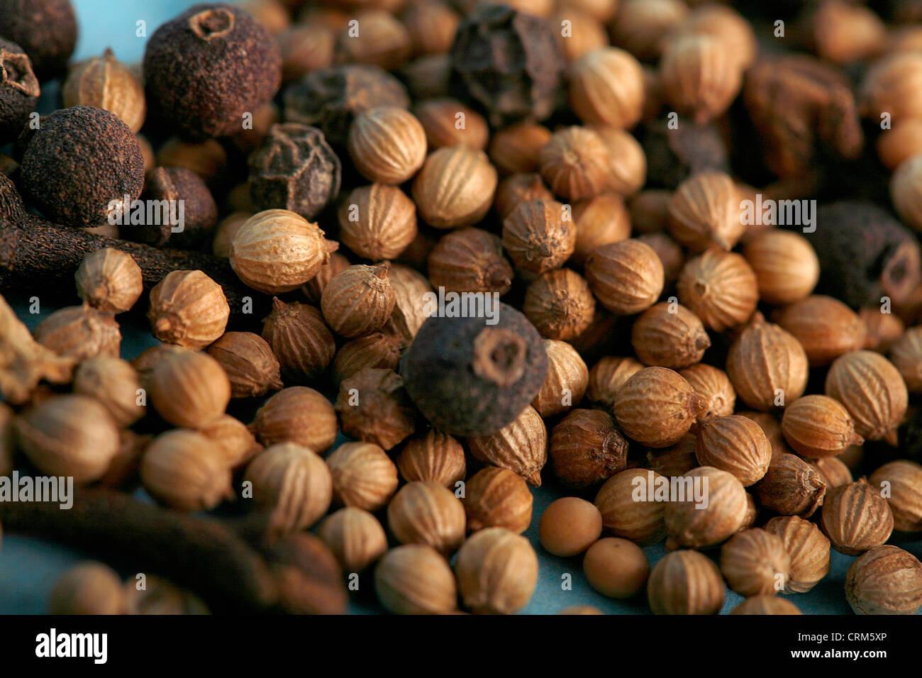 Beize Samen produzieren ein Öl, wenn zerkleinert kann helfen, eine Vielzahl von verschiedenen Beschwerden, Stockbild