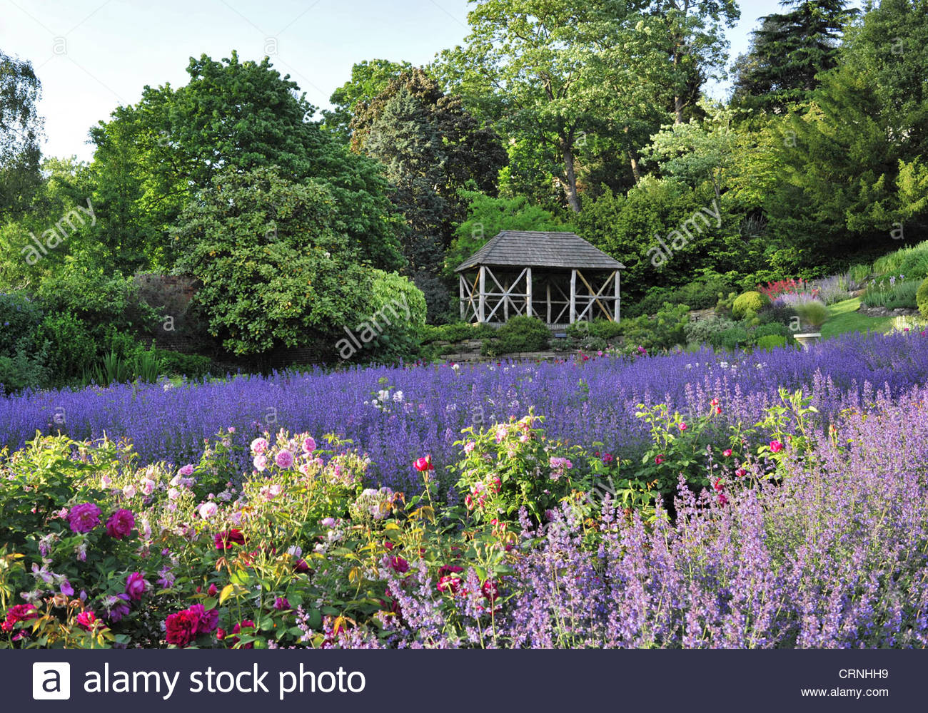 lavendel und rosen blume betten terrasse garten in richmond london uk stockfoto bild 49032629. Black Bedroom Furniture Sets. Home Design Ideas