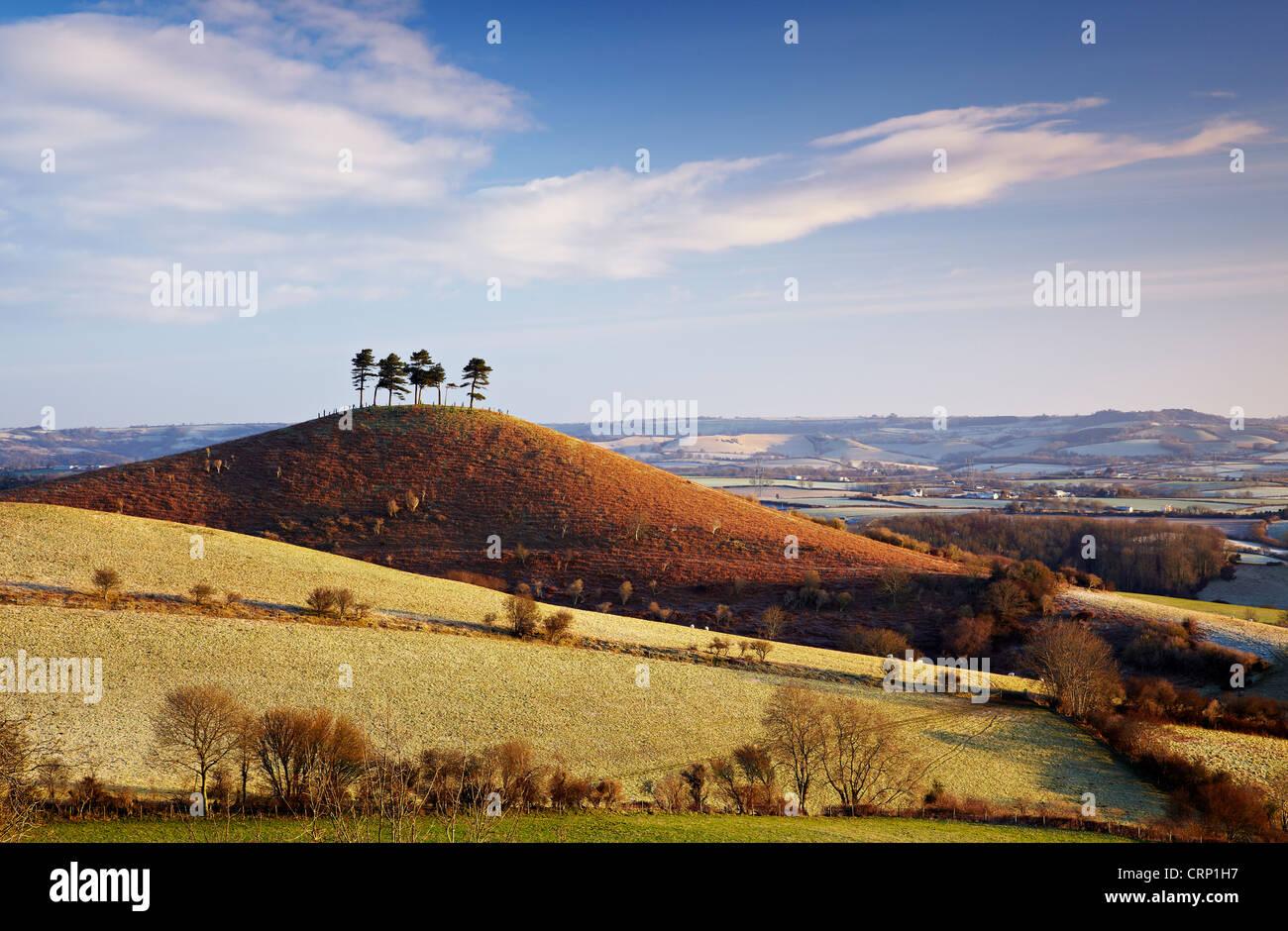 Ein Wintermorgen an Colmer Hügel, eine unverwechselbare, in der Nähe von konischen Sandstein Hügel Stockbild