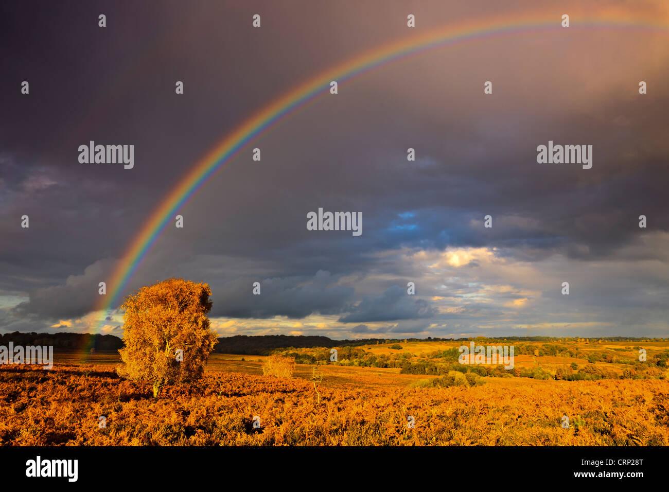 Regenbogen über Heide am Mogshade-Hügel im New Forest National Park. Stockbild