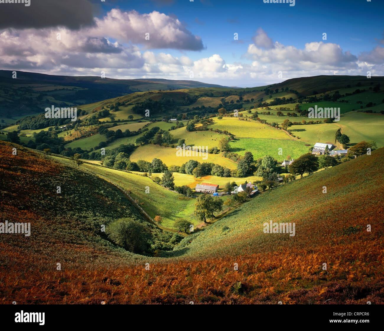 Blick über ein Farn bewachsenen Tal in den Llantysilio Hügeln im Spätsommer. Stockbild