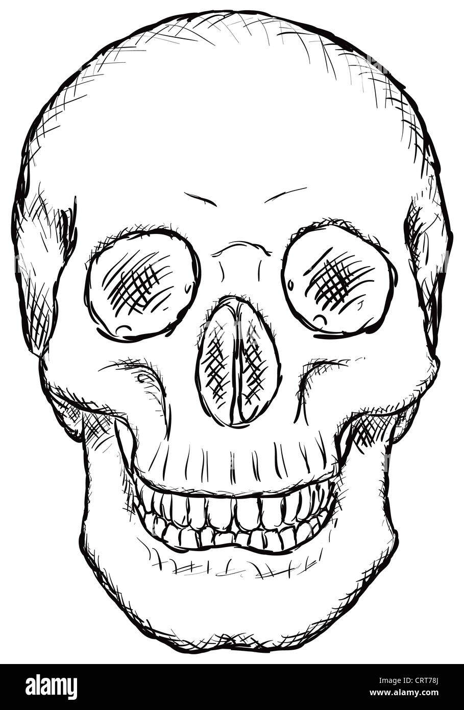 Fantastisch Der Menschliche Schädel Galerie - Menschliche Anatomie ...
