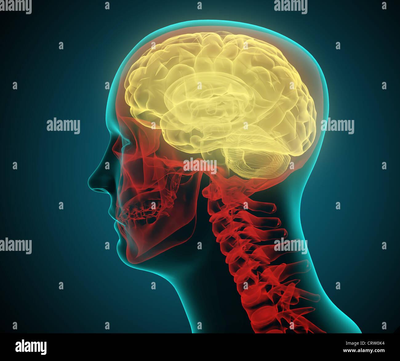 Stilisierte medizinische Illustration eines menschlichen Kopfes Stockbild