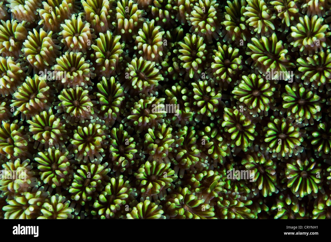 Korallenriff, Okinawa, Japan Stockbild