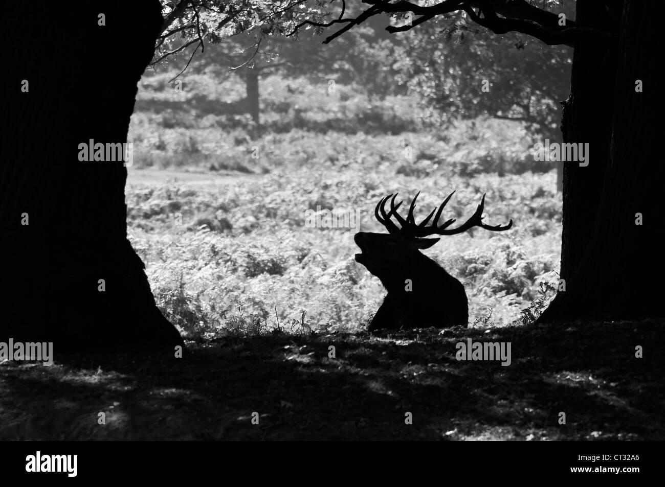 deer antlers black and white stockfotos deer antlers black and white bilder alamy. Black Bedroom Furniture Sets. Home Design Ideas
