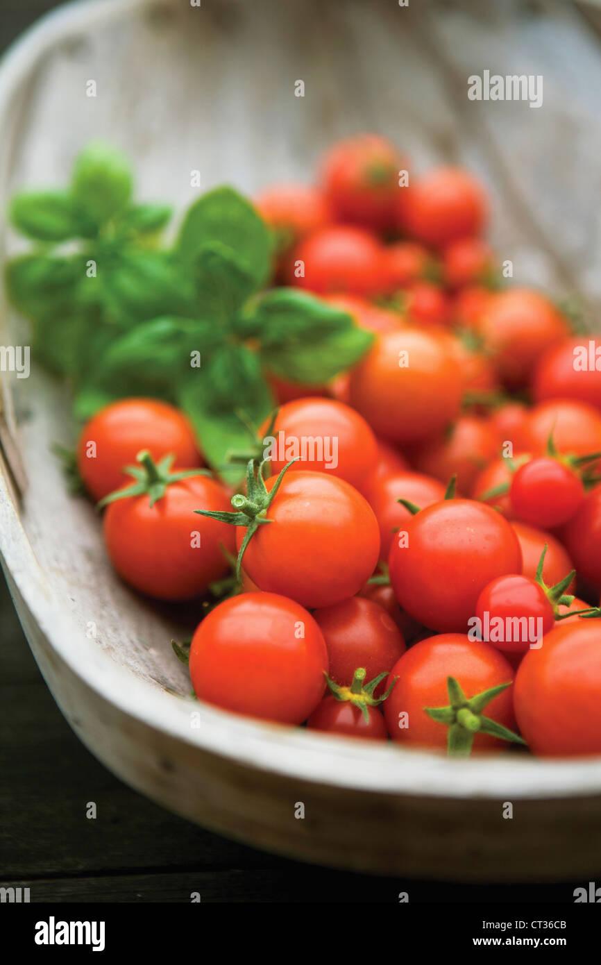 Lycopersicon Esculentum 'Gärtner Delight', Tomate Stockbild