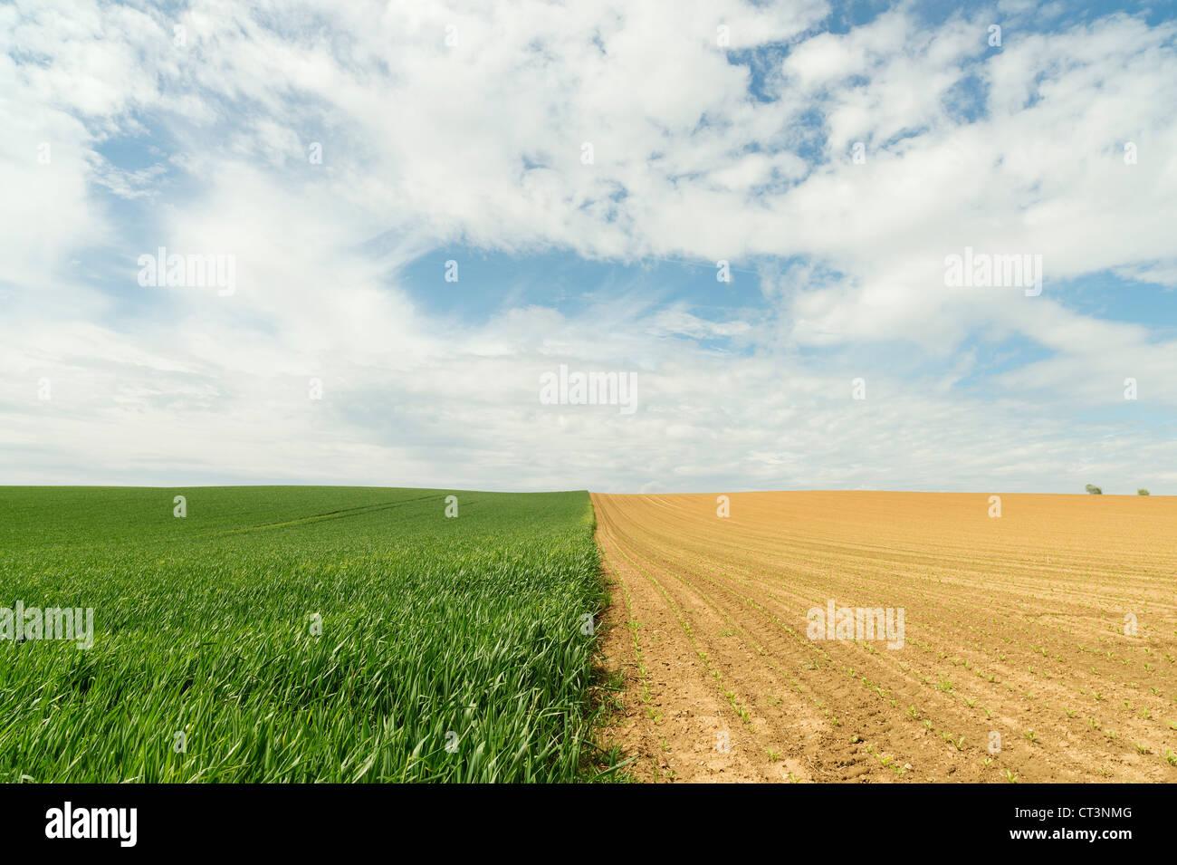 Grenze zwischen Kornfeldern Stockbild