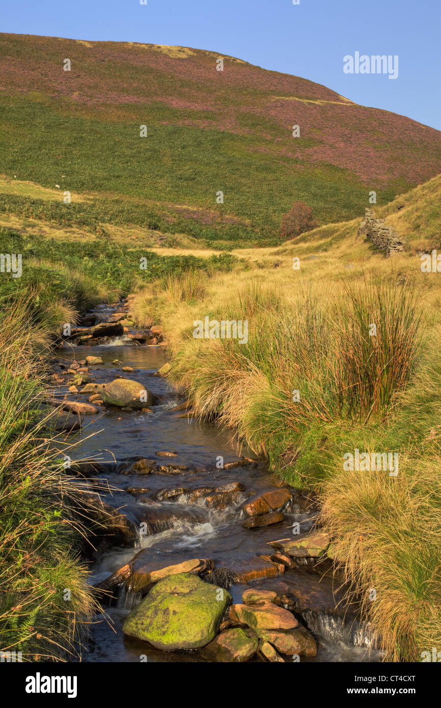 Lord Edward Howard Spring, Broadhead Clough, Dark Peak, Peak District Stockbild