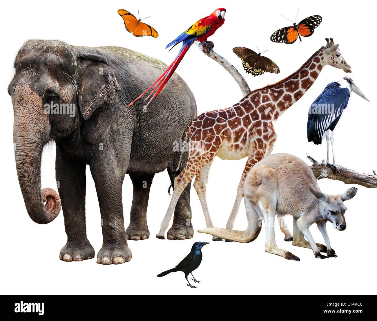 elephant bird stockfotos elephant bird bilder alamy. Black Bedroom Furniture Sets. Home Design Ideas