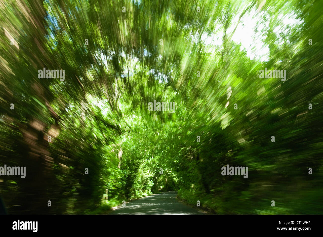 Box Hill, Surrey - impressionistischen Aussicht mit Motion blur, als ob Radfahren schnell auf dem Weg durch einen Stockbild