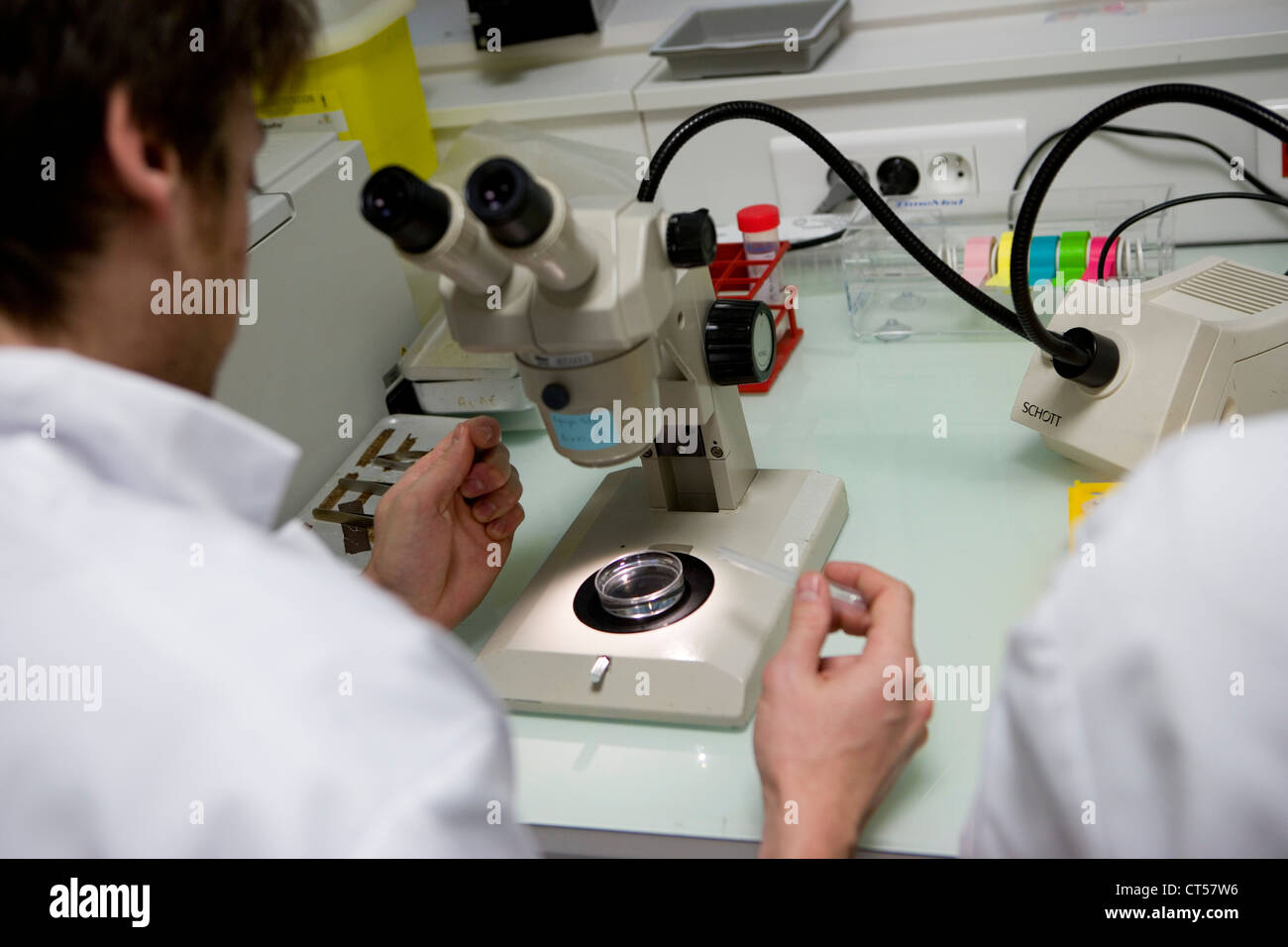 EYE RESEARCH Stockfoto