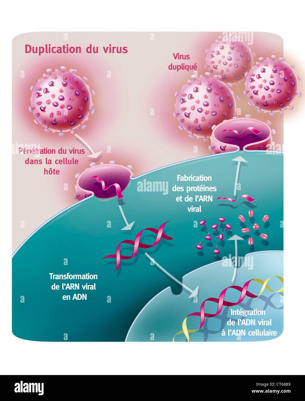 AIDS-VIRUS-INFEKTION, ZEICHNUNG Stockbild