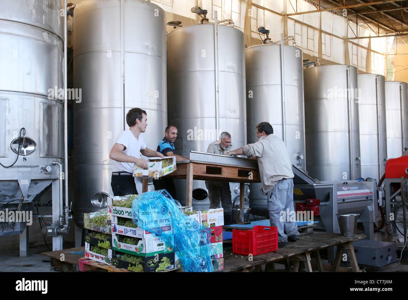 Arbeiter in Cremisan Weingut betrieben und verwaltet von der Salesianer Don Boscos Kongregation. Beit Jala bei Bethlehem, Stockbild