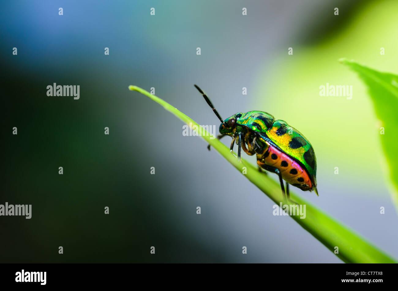 Juwel-Fehler in der grünen Natur Stockbild