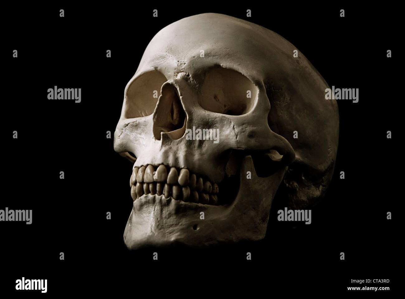 Wunderbar Kennzeichnung Anatomie Und Physiologie Schädel Fotos ...