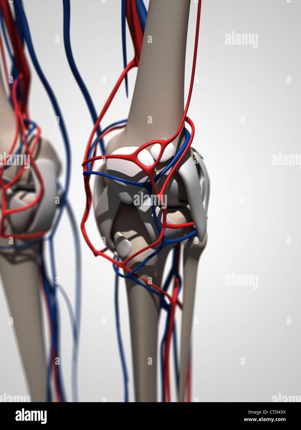 Menschliche Anatomie Kunstwerk Stockfoto, Bild: 49461158 - Alamy