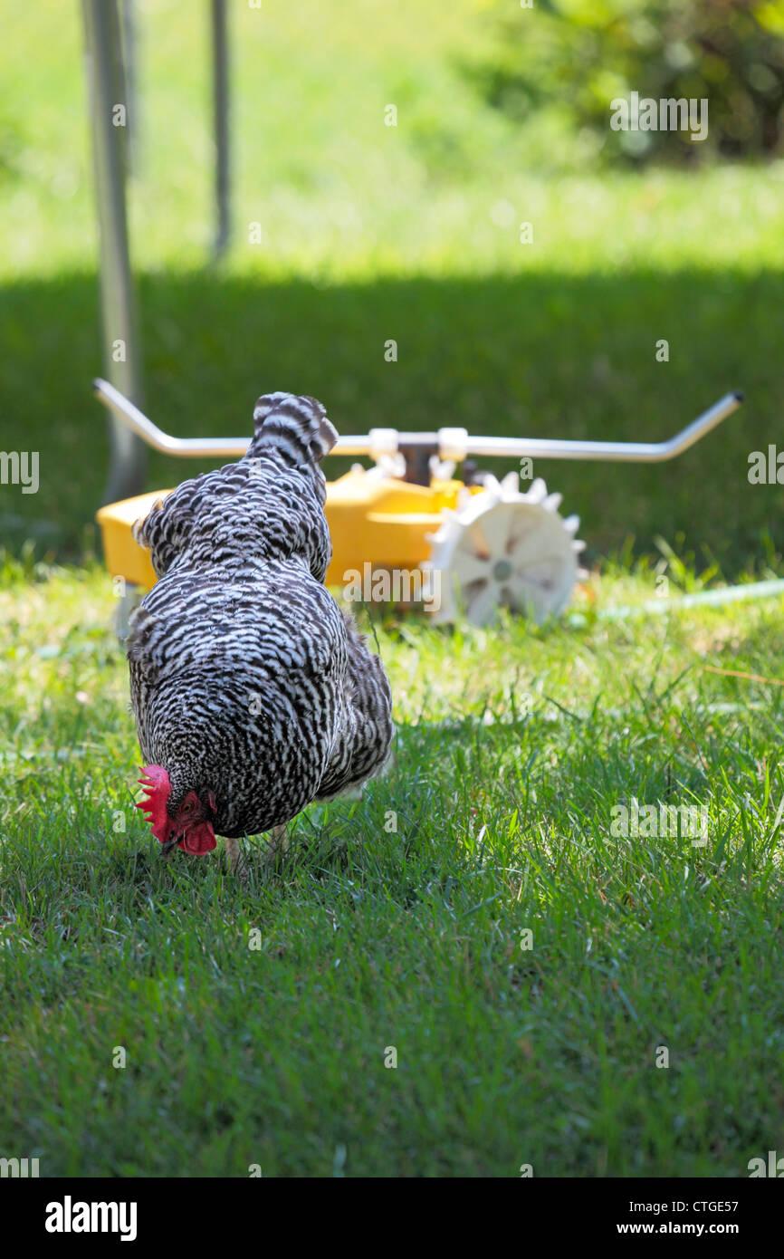 Lawn Tractor Stockfotos & Lawn Tractor Bilder - Alamy