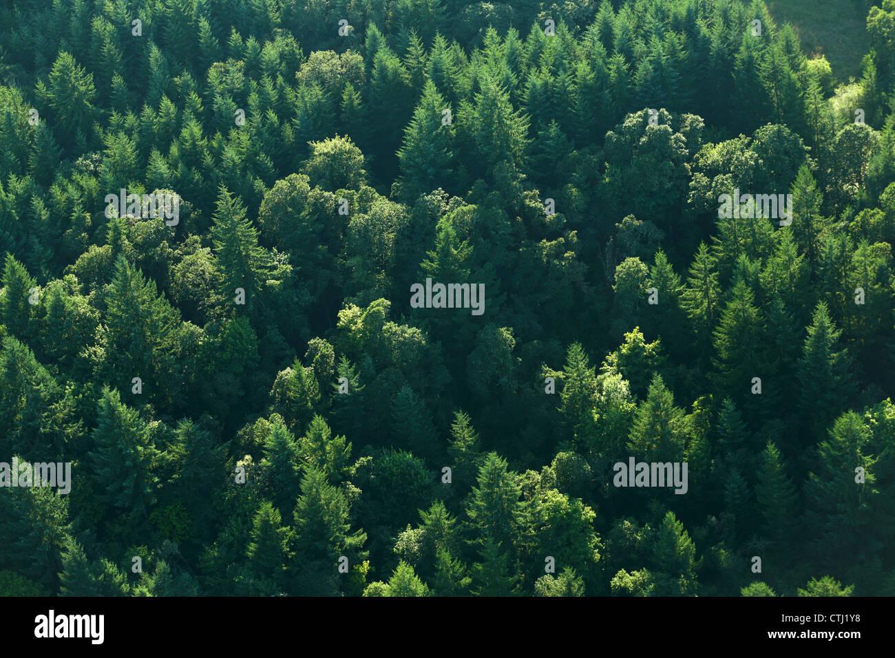 Luftaufnahme von Bäumen im Wald Stockbild