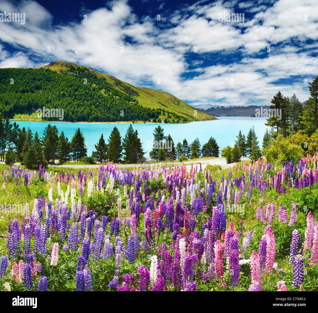 Landschaft mit See und Blumen, Neuseeland Stockbild