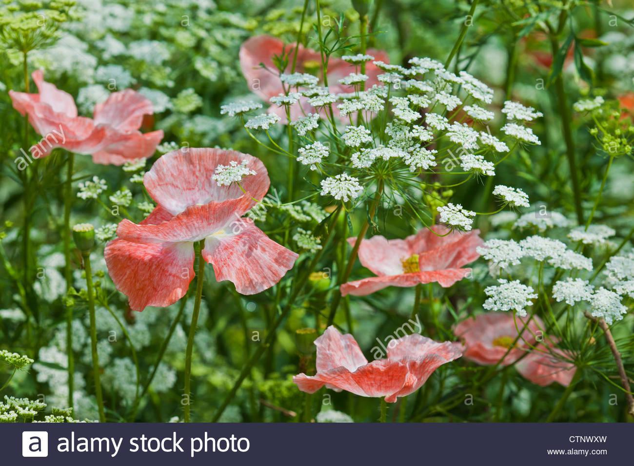 summer flowering stockfotos summer flowering bilder alamy. Black Bedroom Furniture Sets. Home Design Ideas