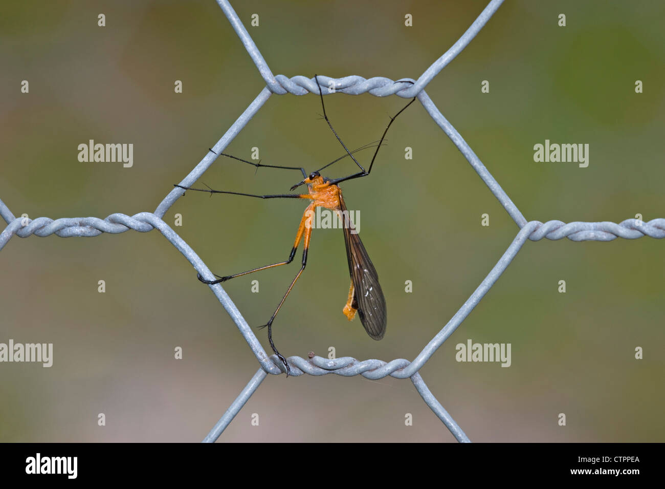 Chicken Wire Stockfotos & Chicken Wire Bilder - Alamy