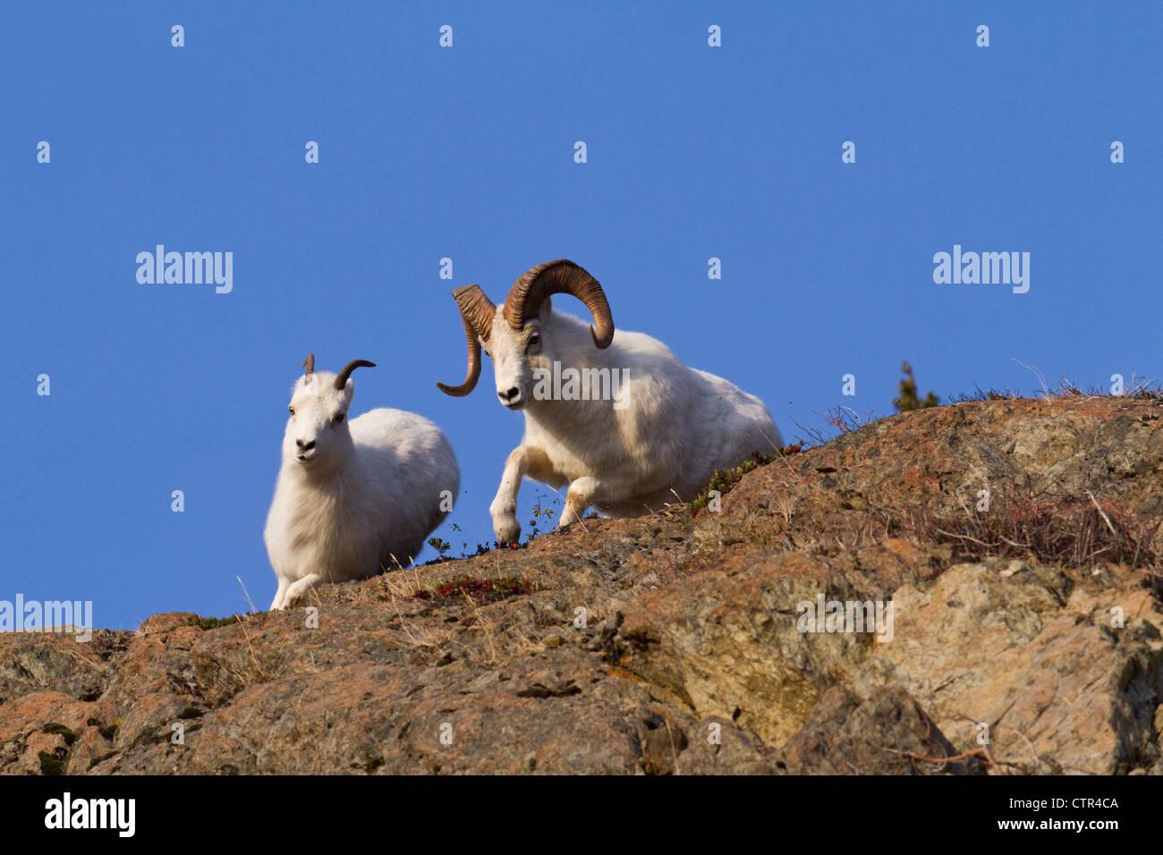 Chases Stockfotos & Chases Bilder - Alamy