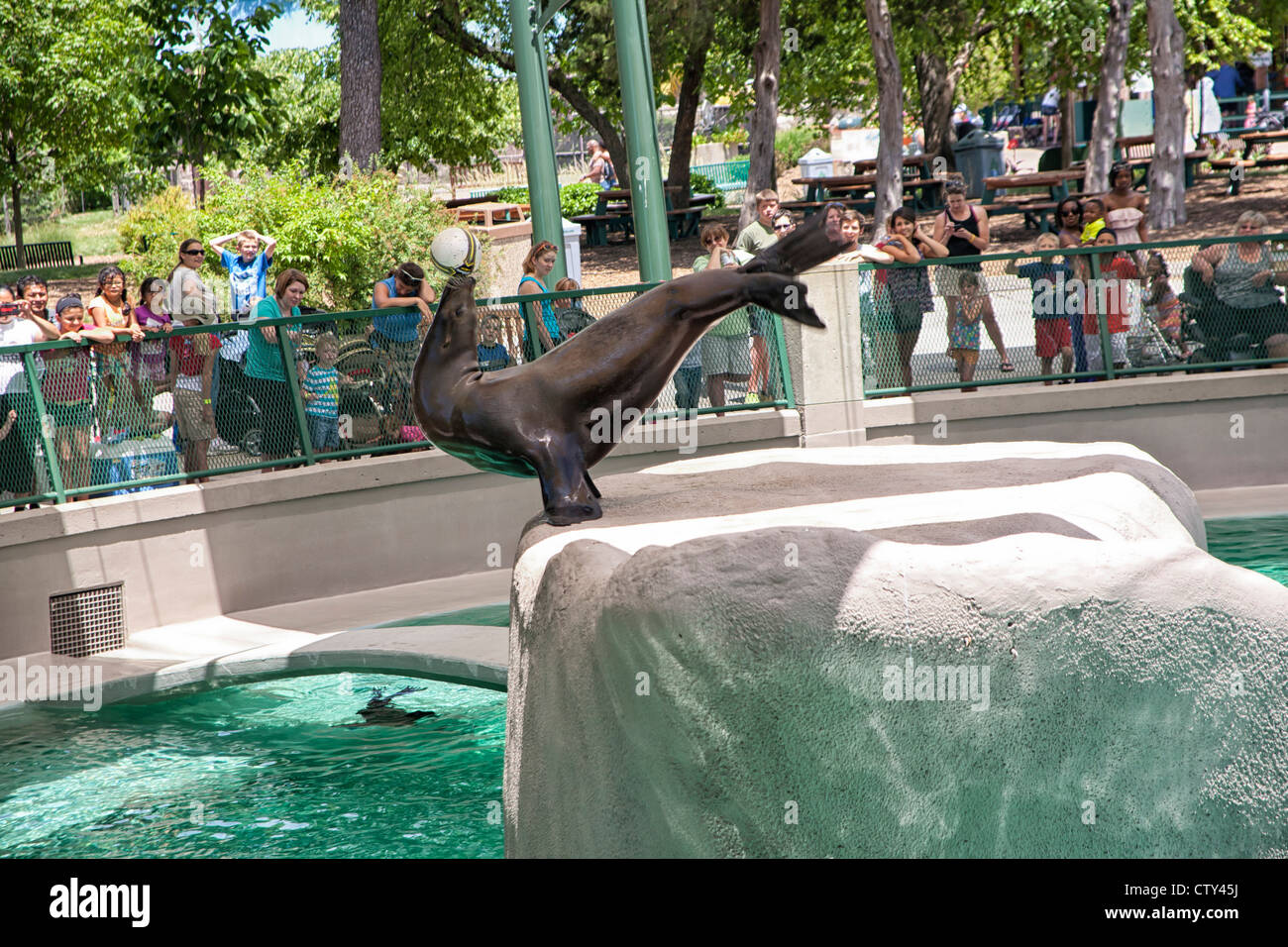Sea Lion erklingt in Kansas City Zoo Stockbild