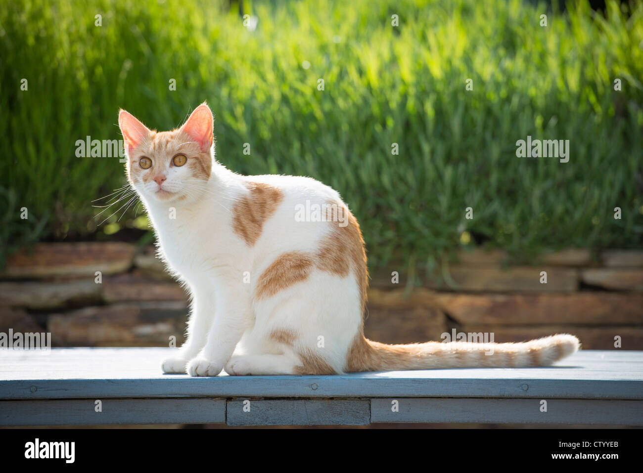 Katze auf Steinmauer Stockbild
