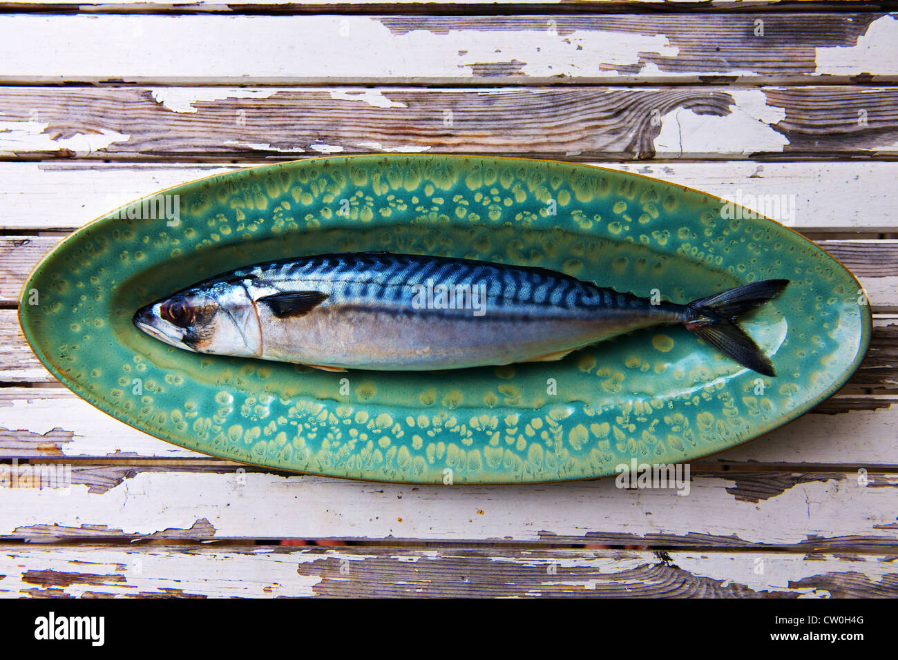 Nahaufnahme von Makrelen auf Platte Stockfoto