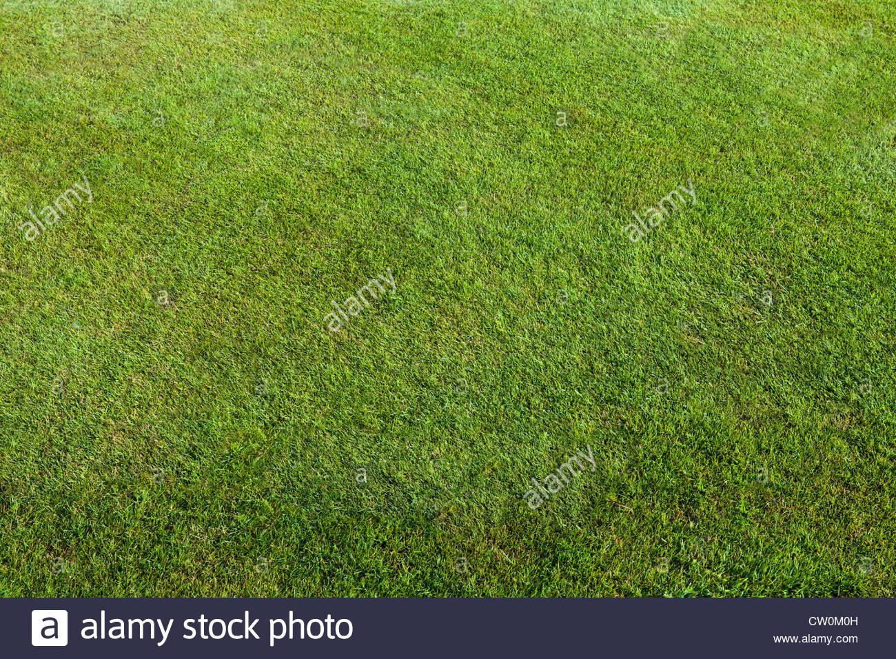 perfekten Rasen Rasen gemäht Bowling Green Suumer August Latchetts Sussex Kind freundlich Kinder Garten Pflanzen Stockbild