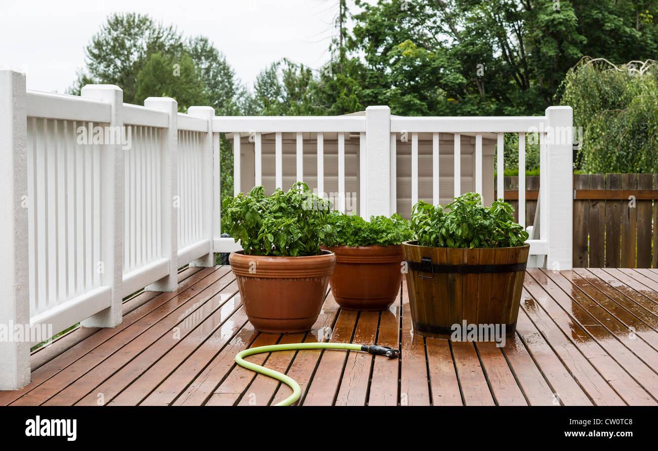 Basilikum Und Petersilie Bewässert Nur Mit Gartenschlauch Auf Terrasse  Verlegen Stockbild