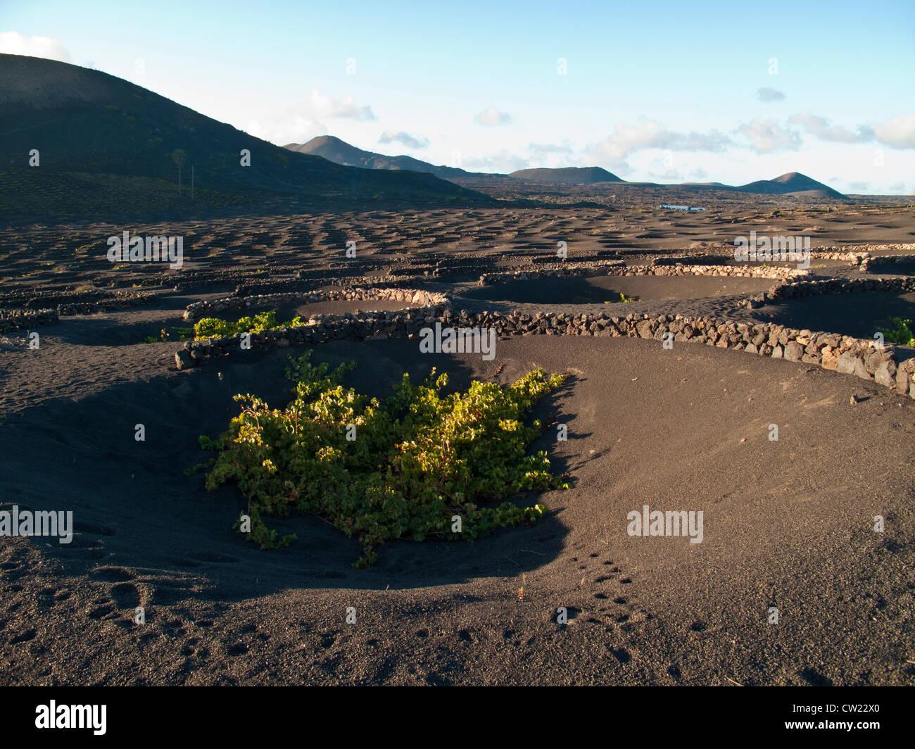 der Weinbau auf der Insel Lanzarote, Kanarische Inseln, Spanien Stockbild
