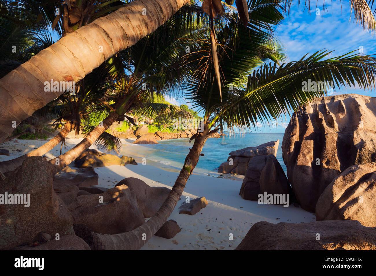 Ansicht des Strandes durch schiefe Kokospalmen. Insel La Digue. Seychellen. Stockbild