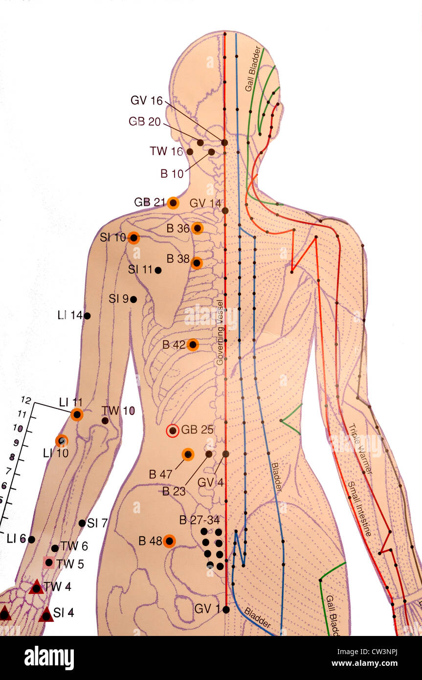 Chinesische Akupunktur-Diagramm Stockfoto, Bild: 49870090 - Alamy