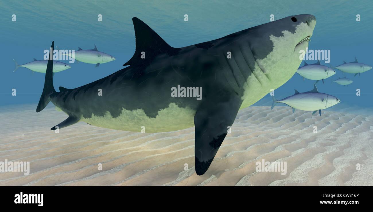 Großartig Große Weiße Haie Malvorlagen Fotos ...