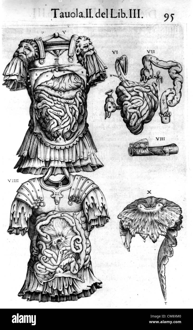 Anatomia del Corpa Humano/Anatomie menschlicher Körper Stockfoto ...