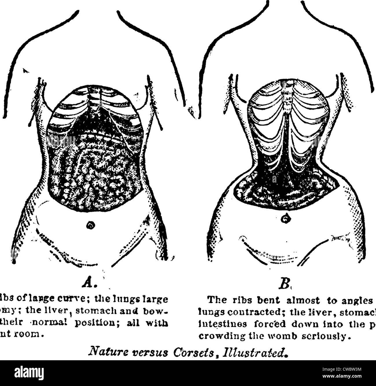 Nett Kaninchen Innere Anatomie Ideen - Anatomie Ideen - finotti.info