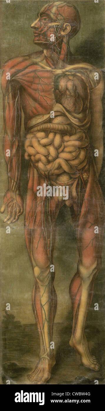 Fein Visuelle Menschliche Anatomie Bilder - Menschliche Anatomie ...