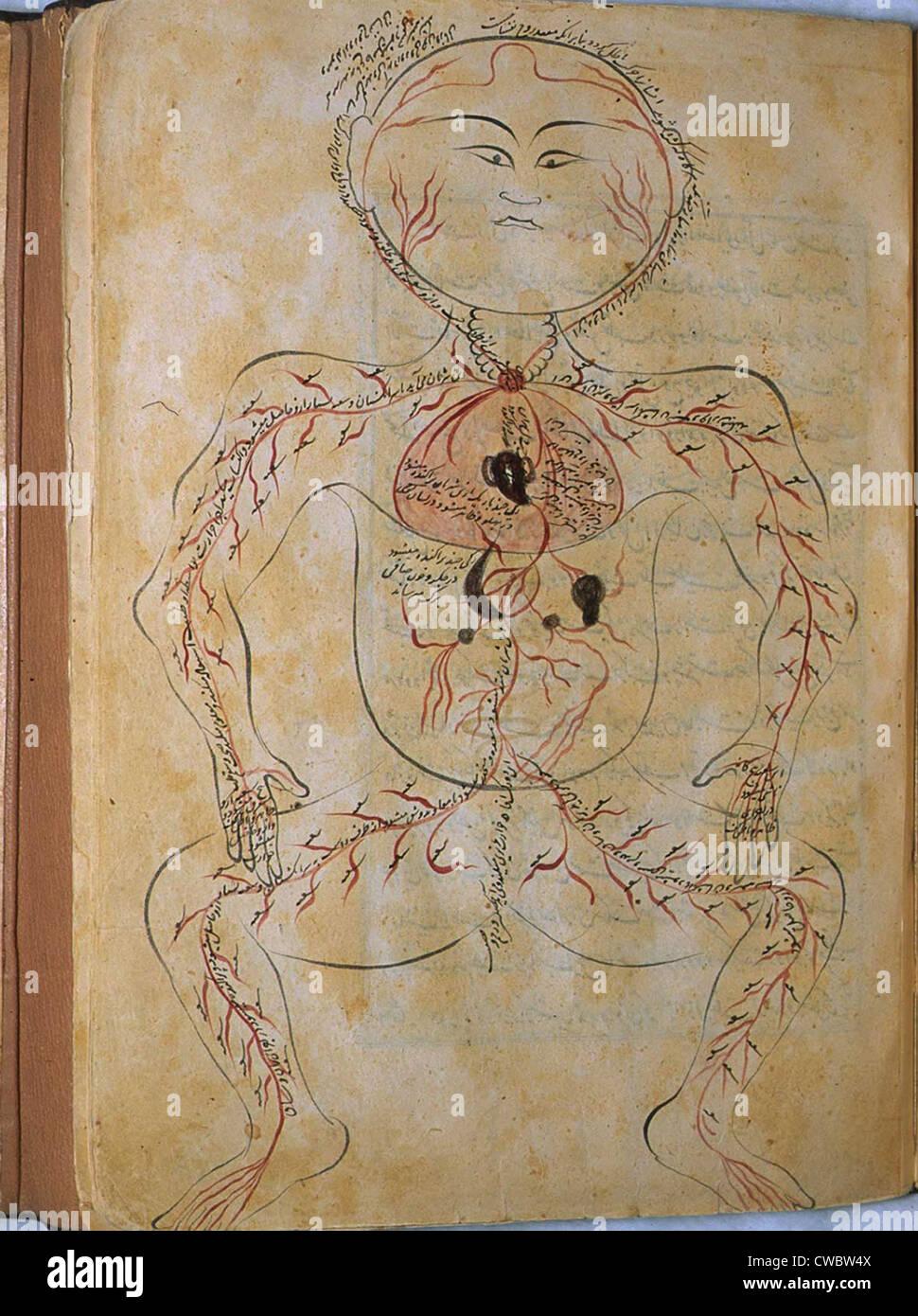 Der menschliche Kreislauf von MANSUR Anatomie, verfasst von der ...