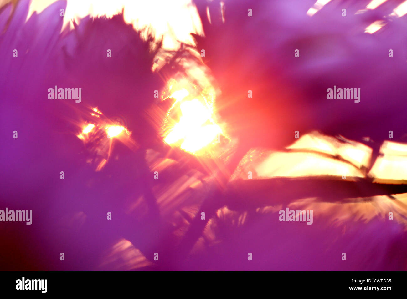Bewegungsunschärfe, Sonne, Blume Stockbild