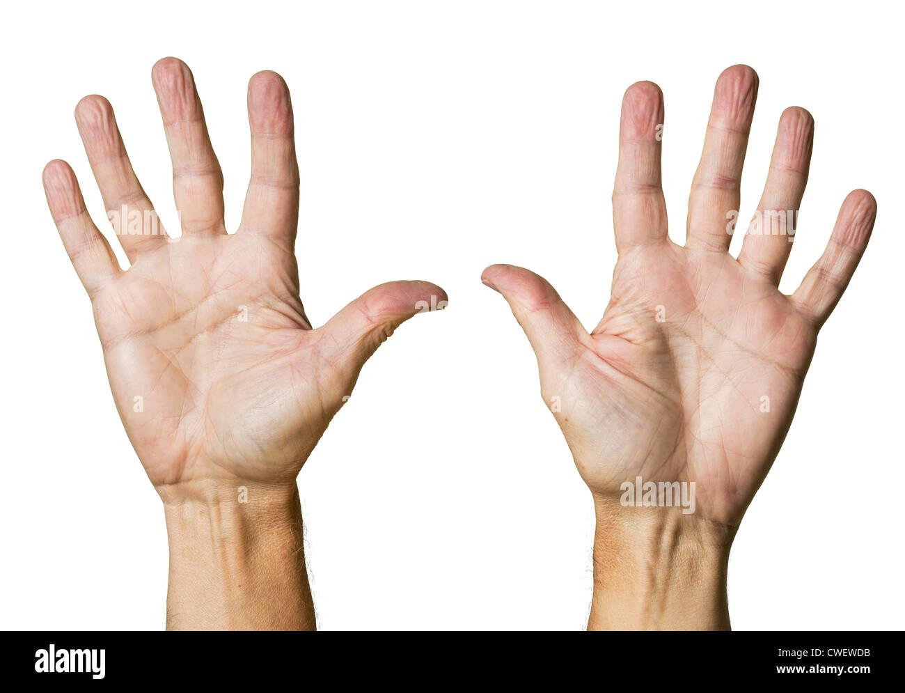 Hände / Palmen isoliert gegen weiß Stockbild