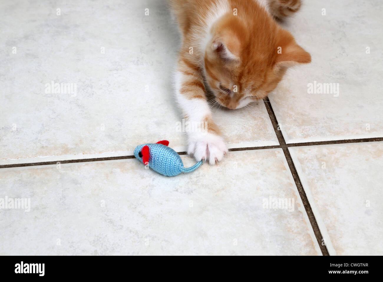 Ingwer und weiße Kätzchen spielen mit einem Spielzeug-Maus Stockfoto