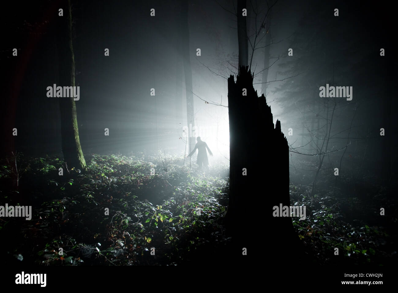 Wald, Nachtleben, Spuk, Spuk Stockbild