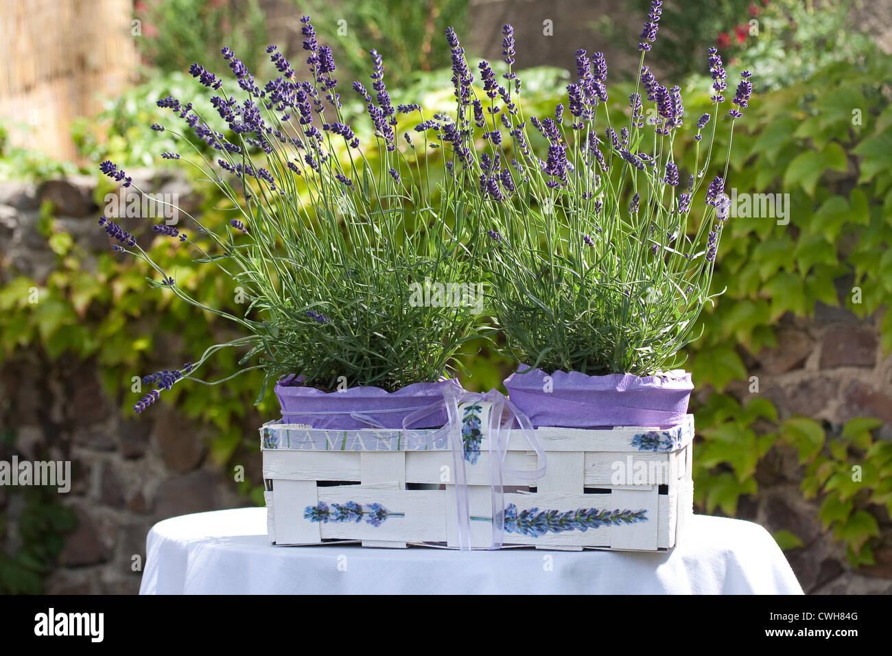 Lavendel dekoration stockfoto bild 50166720 alamy - Dekoration lavendel ...
