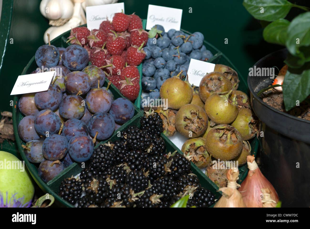 Gut bekannt Eine Darstellung der Hecke oder PYO Frucht. Himbeere 'Autumn Bliss FZ79