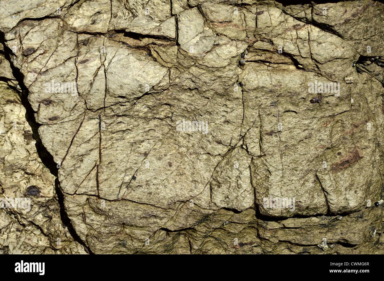 cornwall shoreline stein textur hintergrund in der region zwischen par sands und polkerris. Black Bedroom Furniture Sets. Home Design Ideas
