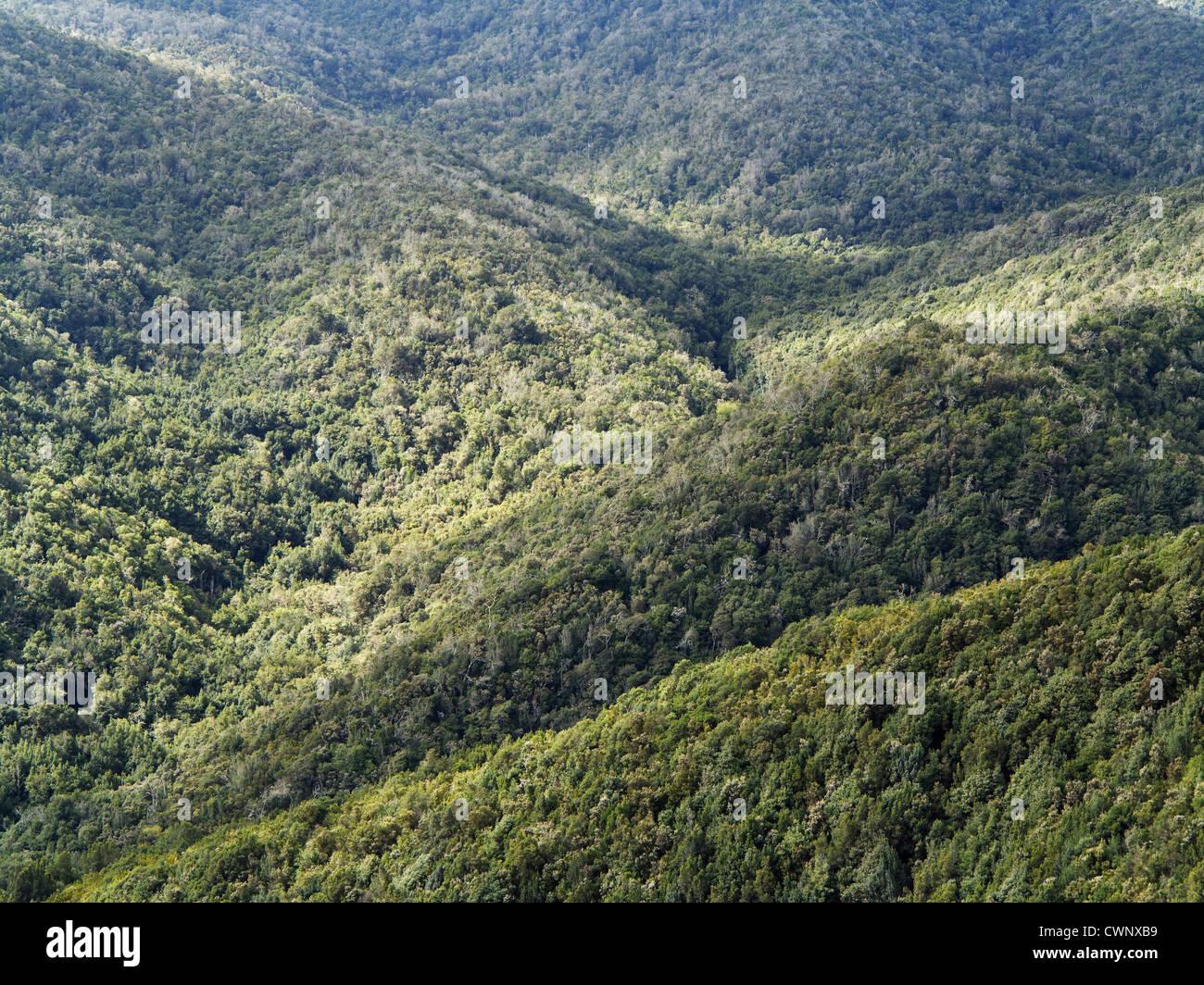 Spanien, La Gomera, Ansicht der Lorbeerwald im Garajonay-Nationalpark Stockbild