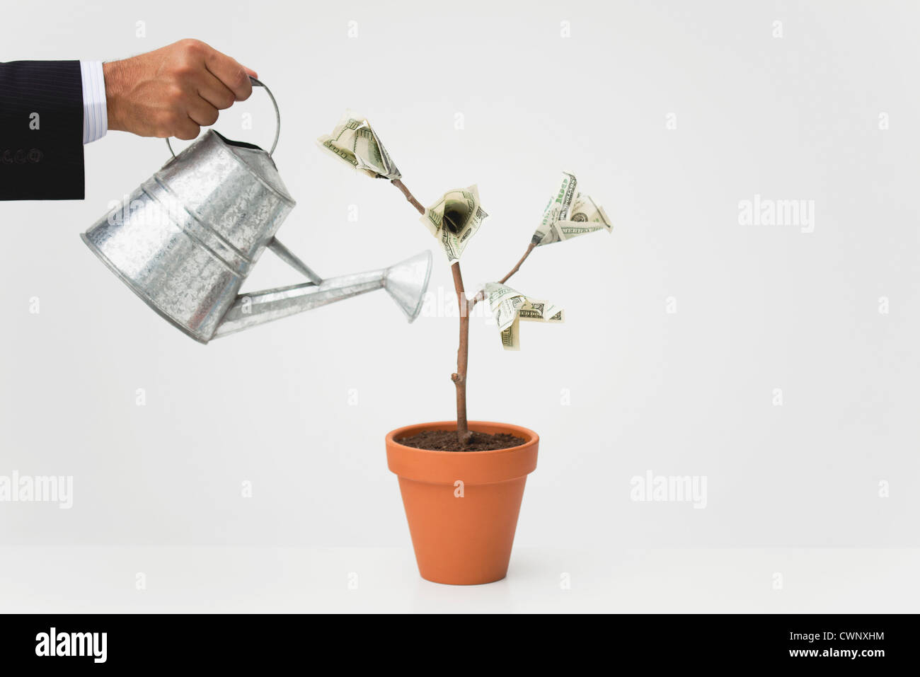 Geschäftsmann Bewässerung Topfpflanzen Geldbaum, beschnitten Stockbild